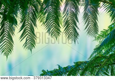 Green Fern Fronds Framing Defocused Lake Colours In Background As Nature Banner Of Abstract.