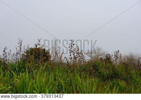 Swampland On Edge Of Lake Okareka With Leafless Trees Though Mist Under Hazy Grey Sky.