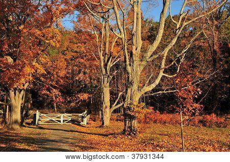 Autumn Landscape Gate