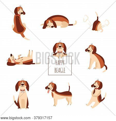 Cute Beagle Dog Or Puppy Set Of Flat Cartoon Vector Illustration Isolated On White.