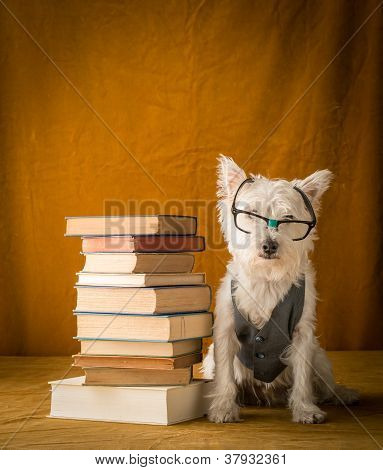 Dog with glasses next to stack of books