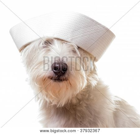 Dog wearing a sailor hat