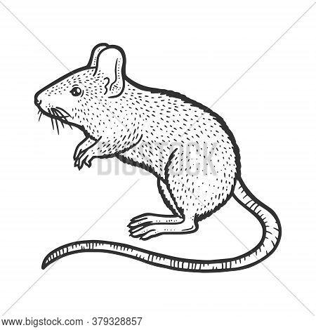 Striped Field Mouse Sketch Engraving Vector Illustration. T-shirt Apparel Print Design. Scratch Boar