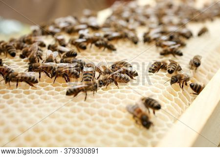 White Honeycomb With Bees In An Apiary Close-up. Apiculture.