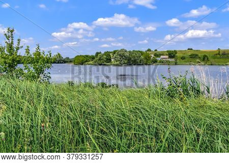 Large Plantation Of Greater Pond Sedge On The Shore Of A Lake In The Countryside. Natural Panorama W