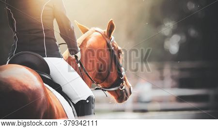 A Rider Sits In The Saddle On A Beautiful Sorrel Sports Horse And Holds Its Reins With His Hands On