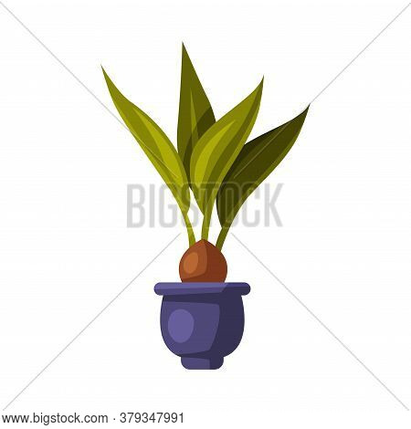 Indoor Houseplant In Blue Pot, Green Potted Ficus Plant For Interior Decoration Vector Illustration