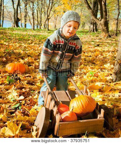 little child with a wheelbarrow