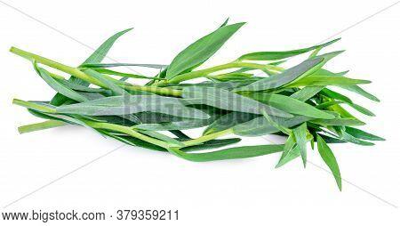 Tarragon Herbs Close Up Isolated On White   Background. Fresh Tarragon Leaves Macro