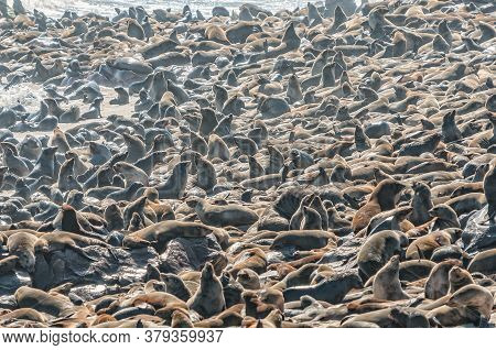 A Colony Of Cape Fur Seals, Arctocephalus Pusillus, Basking In The Sun At Cape Cross In Namibia