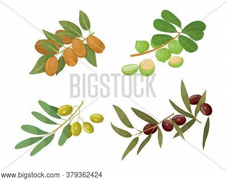 Branches With Foliage And Fruits, Isolated Set Of Olive And Almond, Castor And Macadamia Twigs. Ingr