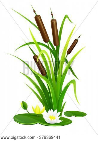 Reed bush thicket plant with green leaves and water lily flowers, isolated white background. 3D illustration.