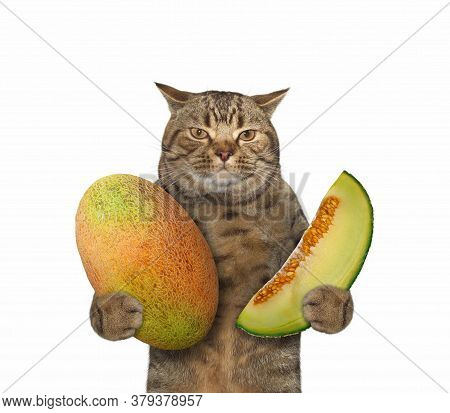 The Beige Cat Is Holding A Big Melon And A Slice Of Melon. White Background. Isolated.