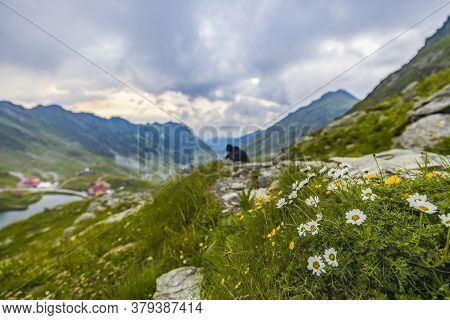 Wild Flowers With Tourist Man And Mountains With Chalets In The Background.