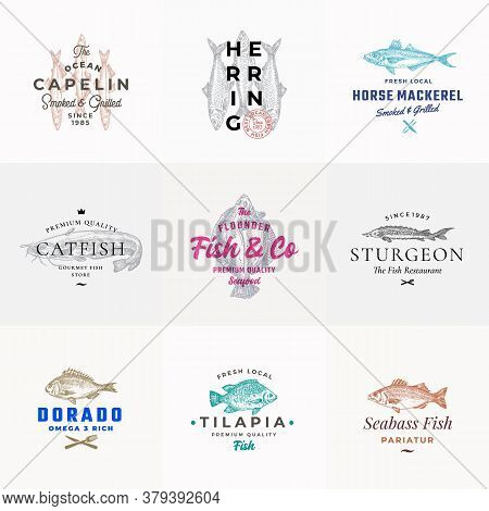 Premium Quality Seafood Vector Signs Or Logo Templates Set. Hand Drawn Fish Sketches With Typography