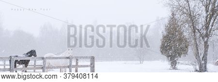 Thoroughbred Horses On Snow Farm Side View. Winter Countryside Landscape Background With Copyspace.