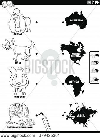 Black And White Cartoon Illustration Of Educational Matching Game For Children With Wild Animal Spec