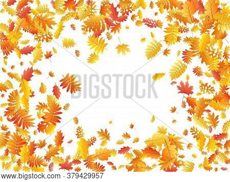 Oak, Maple, Wild Ash Rowan Leaves Vector, Autumn Foliage On White Background. Red Orange Yellow Oak