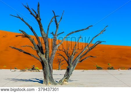 Clay plateau in the part of the Namib Naukluft desert. Sunny morning. Dead lake with dead trees. The bottom of the dried lake Sussussflay. The concept of exotic, extreme and photo tourism