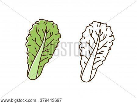 Organic Romaine Lettuce Monochrome And Colorful Set Vector Flat Illustration. Dietary Antioxidant Ve