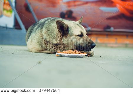 Dog Chewing Food On Street. Obedient Dog Lying On Asphalt Ground And Eating Food From Plate On City