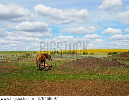 Horse With Foal In The Field Rural Landscape.
