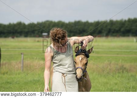 A Falcon Color Foal In The Field, Wearing A Fly Mask, Young Woman Takes Off The Fly Mask