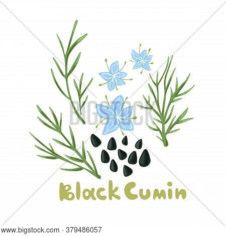 Nigella Sativa. Black Cumin Plant, Flowers, Branches, Seed. Spices And Herbs. Floral Design With Bla
