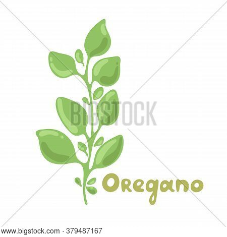 Oregano Sprigs Vector Cute Clipart Illustration. Isolated Plant With Leaves. Herbal Flat Style Illus