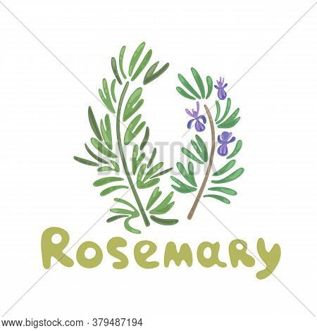 Rosemary Sprigs. Rosemary Herb And Vector Funny Clipart Illustration. Elegant Drawings Of Rosemary P