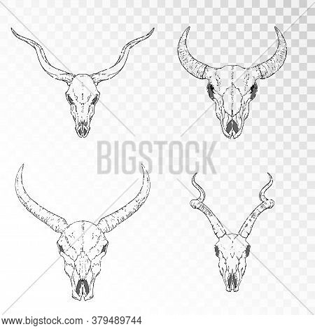 Vector Set Of Hand Drawn Skulls Of Horned Animals: Antelopes, Bull And Wild Buffalo On Transparent B