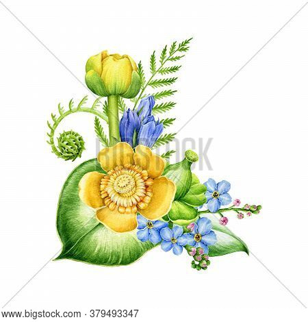 Yellow River Lily, Forget-me-not Blue Flowers And Fern Arrangement Watercolor Illustration. Hand Dra
