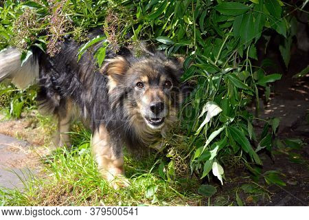 Dog Guards Housing In The Open Air. Pet Dog On A Leash Near The House. A Beautiful Furry Animal With