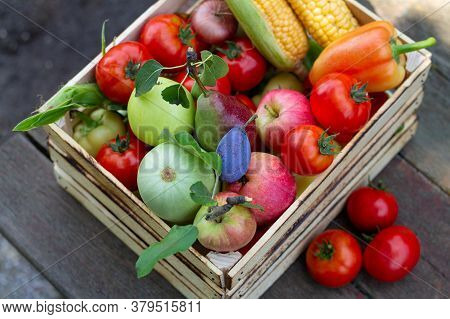 Wooden Crate Full Of Eco Farm Veggies And Fruits