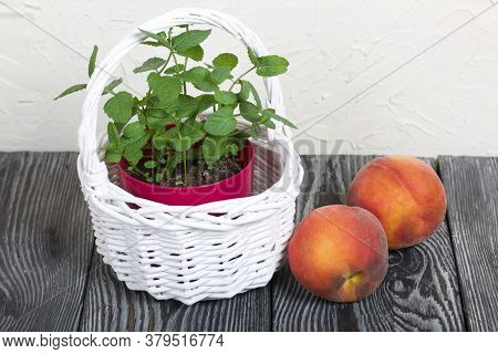 Mint In A Pot. A Pot In A White Wicker Basket. Several Peaches Are Nearby. On A White Background.