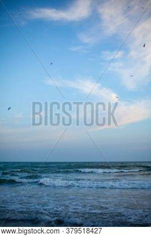 Seagulls Are Enjoying Good Weather. Seagulls Fly Over The Sea