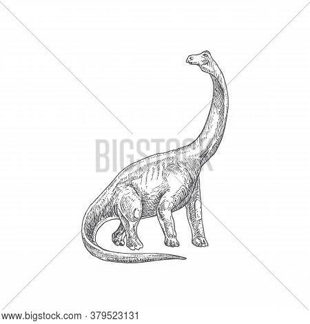 Prehistoric Dinosaur Doodle Vector Illustration. Hand Drawn Brontosaurus Reptile Engraving Style Dra