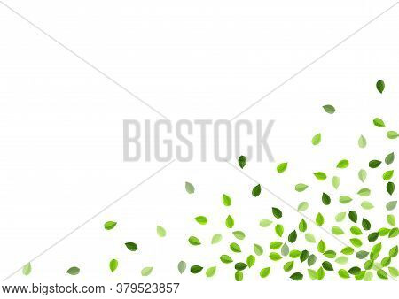 Swamp Leaf Realistic Vector Template. Falling Leaves Banner. Forest Foliage Motion Pattern. Greens O