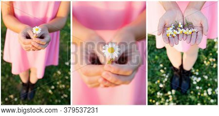 Sequence of photos in spring. Girl in pink dress picking up daisies