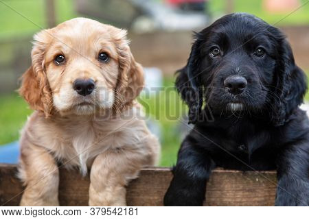 Cute black and brown puppy dogs, two puppies, together leaning on a wooden fence outside
