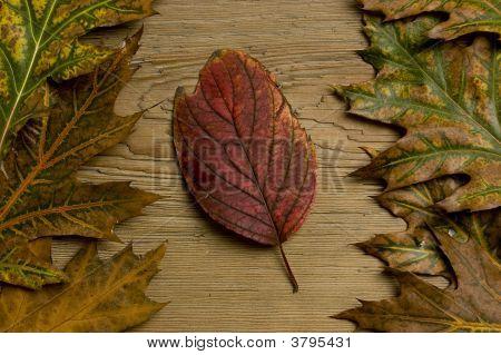 Autumn Leaf Over Old Board