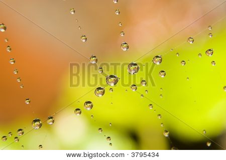 Water drops on spider web. Autumn photo poster
