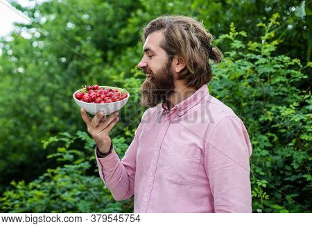 Eating Healthy. With No Chemicals. Feel Hunger. Cherry Season. Man Eat Organic Berries. Harvesting C