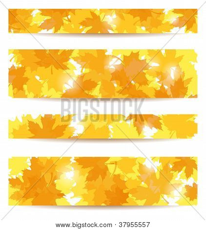 Set of four vector banners with autumn maple leaves.