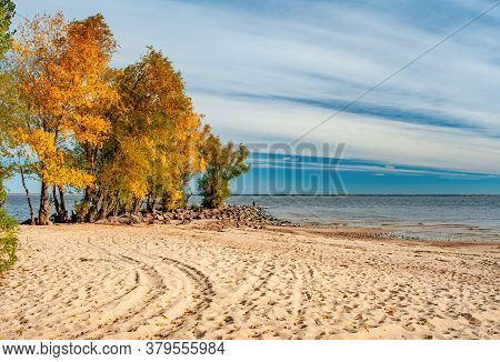Yellowed Trees And Textured Sand On The Beach On Shore Of Dnieper River In Cherkasy, Ukraine At Autu