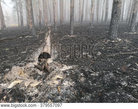 Forest Fire And Its Consequences. Smoke Black Earth Burnt. Burnt Tree Trunks And Ashes. Charred Bran