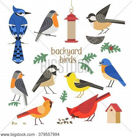 Birdwatching Icon Vector Set. Red Northern Cardinal, Robin Chickadee, Blue Bird, Goldfinch Comic Fla