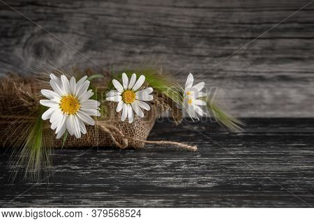 Beautiful Flowers, White Daisies In A Burlap Basket On A Gray Wooden Grange Background.