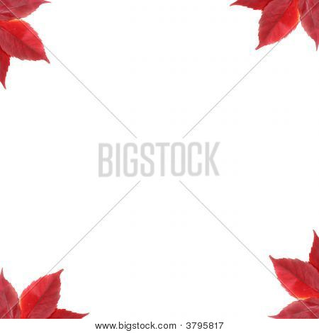 Background Frame With Leafs