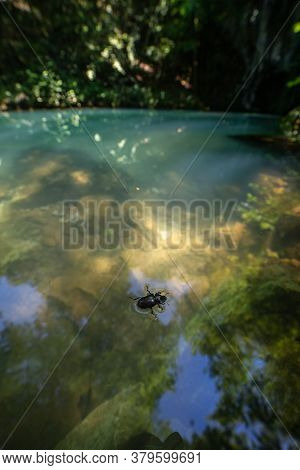 Bug In Water At Krupajsko Vrelo (the Krupaj Springs) In Serbia, Beautiful Water Spring With Waterfal